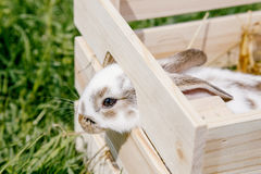 Weinig konijn in de doos Royalty-vrije Stock Afbeelding