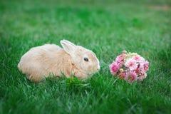 Weinig konijn en een boeket van bloemen op het gras Stock Afbeelding