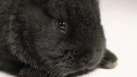 Weinig konijn of konijntjes dichte omhooggaand stock video
