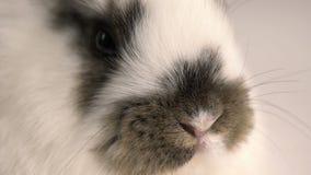 Weinig konijn of konijntjes dichte omhooggaand stock footage
