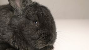 Weinig konijn of konijntjes dichte omhooggaand stock videobeelden