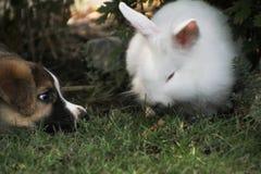 Weinig konijn met hond Royalty-vrije Stock Fotografie