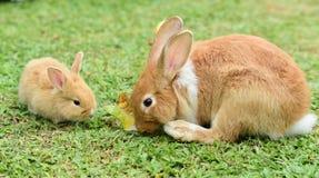 Weinig konijn om in het gazon te lopen royalty-vrije stock foto's