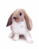 Weinig konijn op een witte achtergrond Stock Foto's