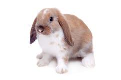 Weinig konijn op een witte achtergrond Stock Foto