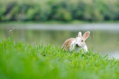 Weinig konijn op groen gras Royalty-vrije Stock Afbeeldingen