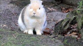 Weinig konijn, snoepje, Pasen stock footage