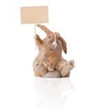 Weinig konijntje met teken Stock Afbeeldingen