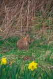 Weinig konijntje op het gebied royalty-vrije stock fotografie