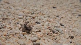 Weinig Krab in het zand. sluit omhoog stock footage