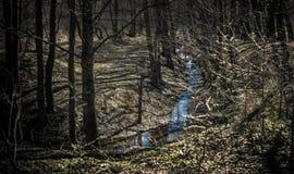 Weinig kreek in een donker bos stock foto's