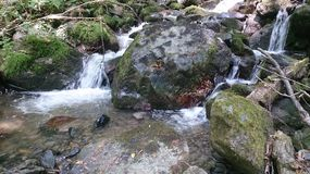 Weinig kreek in het diepe bos stock foto's