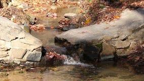 Weinig kreek in het Park van de Steenberg, de V.S. stock video