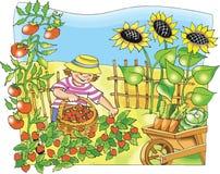 Weinig landbouwersjongen het plukken aardbei Stock Foto's
