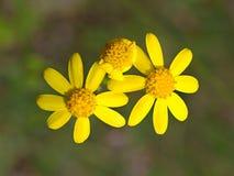 Weinig lente bloeit op gebied stock fotografie