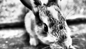 Weinig leuk konijntje die voor voedsel op een landbouwbedrijf snuiven royalty-vrije stock afbeelding