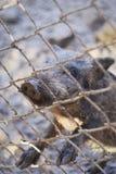 Weinig leuke babybeer in de dierentuin royalty-vrije stock foto's