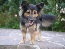 Weinig, leuke hond Royalty-vrije Stock Foto's
