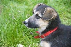 Weinig leuke hond die in het gras liggen Stock Foto