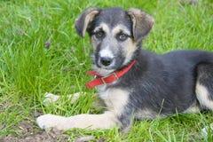 Weinig leuke hond die in het gras liggen Stock Afbeelding