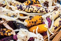 Weinig maïskolven van kleurrijk graan in mand royalty-vrije stock afbeelding