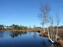 Weinig meer en mooie bomen in moeras, Litouwen Royalty-vrije Stock Foto's