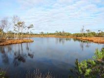 Weinig meer en mooie bomen in moeras, Litouwen Royalty-vrije Stock Foto