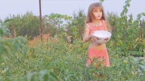 Weinig mooi meisje verzamelt tomaten in de tuin stock video