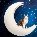 Weinig multicolored binnenlandse kat bij maan op sterrige achtergrond Stock Foto