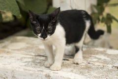 Weinig nieuwsgierige en kat die rond staren spelen Mooie ogen Royalty-vrije Stock Foto's
