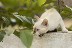 Weinig nieuwsgierige en kat die rond staren spelen Mooie ogen Stock Fotografie