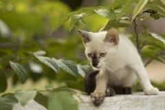 Weinig nieuwsgierige en kat die rond staren spelen Mooie ogen Stock Foto