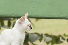 Weinig nieuwsgierige en kat die rond staren spelen Mooie ogen M Royalty-vrije Stock Foto's