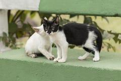 Weinig nieuwsgierige kat die rond staren Beaurifulogen Grote details! Royalty-vrije Stock Foto