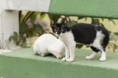 Weinig nieuwsgierige kat die rond staren Beaurifulogen Grote details! Royalty-vrije Stock Afbeeldingen