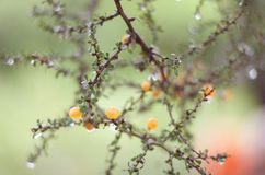 Weinig oranje fruit Stock Fotografie