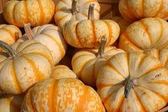Weinig oranje en witte pompoenen Stock Fotografie