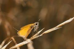 Weinig oranje vlinder op een hooistro Stock Foto's