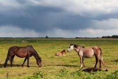 Weinig paarden en veulennen op weiland Royalty-vrije Stock Fotografie