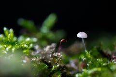 Weinig paddestoel het groeien in bos Royalty-vrije Stock Afbeelding