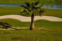 Weinig palm op golfcursus Stock Foto's