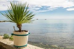 Weinig palm in witte uitstekende pot dichtbij overzees Royalty-vrije Stock Fotografie