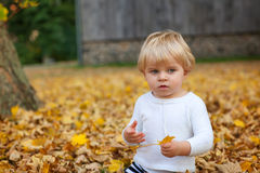 Weinig peuterjongen die in de herfstpark spelen Stock Afbeelding
