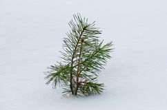 Weinig pijnboomboom in de winter onder de sneeuw Royalty-vrije Stock Foto's