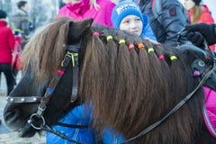 Weinig pluizige poney stock foto