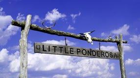 Weinig Ponderosa Stock Foto's