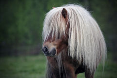 Weinig poney royalty-vrije stock foto's