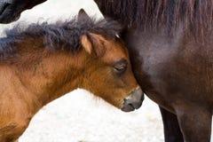 Weinig poney royalty-vrije stock afbeeldingen