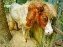 Weinig poney Stock Foto's
