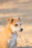 Weinig portret van de puppyhond stock afbeeldingen